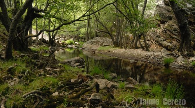 Tarde en el arroyo Jarigüela (Alía)