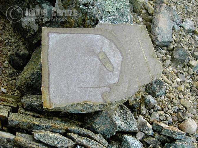 Fósiles y otras curiosidades pétreas del Geoparque Villuercas Ibores Jara