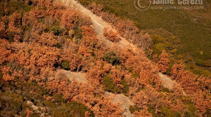 La Sierra de la Palomera se tinta de ocre.