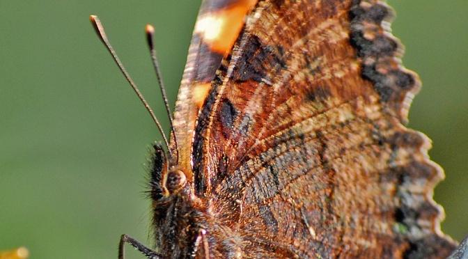 Insectos, un gran mundo, un gran desconocido …