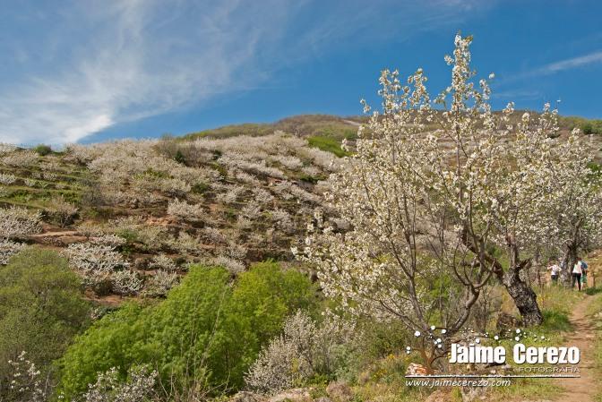 Visita al Valle del Jerte …