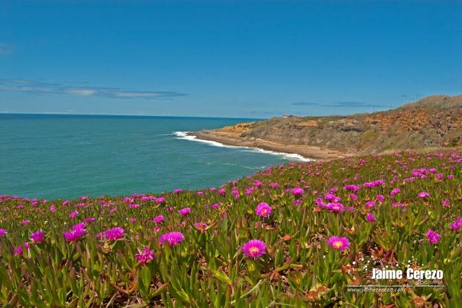 Baía dos Coxos (Ericeira – Portugal)