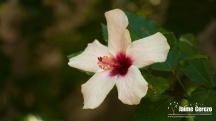 jardintropical10