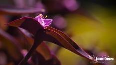 jardintropical13