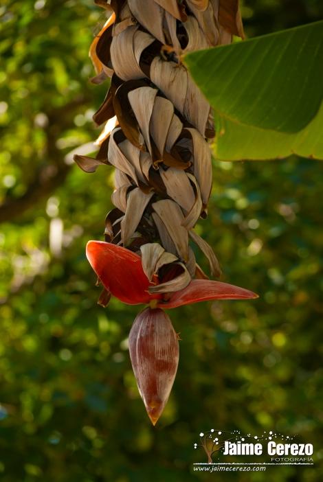 jardintropical14