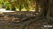 jardintropical18