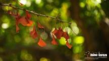 jardintropical19
