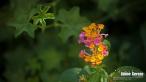 jardintropical20