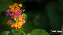 jardintropical21