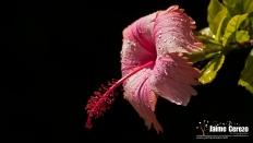 jardintropical23