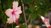 jardintropical24