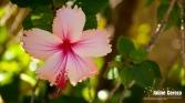 jardintropical25