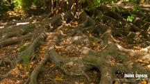 jardintropical3