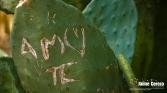 jardintropical8