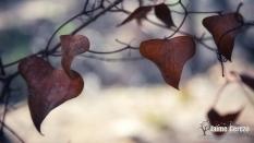 hojas-01