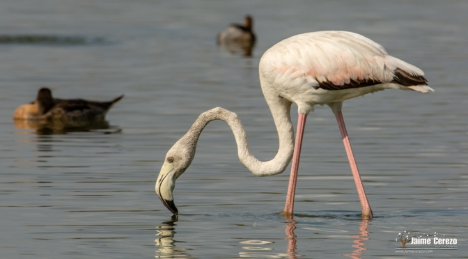 Fotografiando aves en Evoa