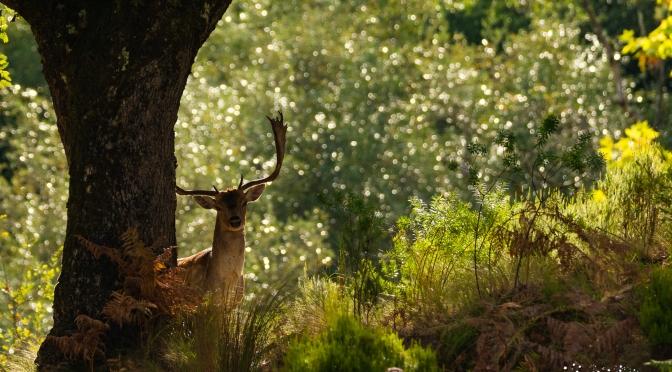 Fotografía de fauna en la Tapada de Mafra